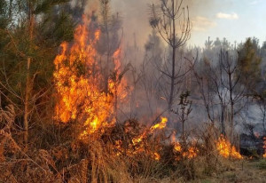 In due settimane 66 incendi boschivi in Piemonte, prosegue l'allerta