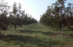 Coldiretti: nuovo corso formativo sulla coltivazione delle noci in partenza