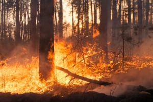 Gli incendi boschivi continuano a preoccupare l'amministrazione regionale: prosegue lo stato di allerta