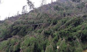 Raccolti 3 mila euro per impiantare nuovi alberi nel Bellunese