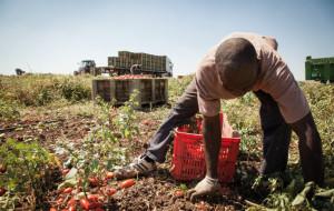 Coldiretti Cuneo: 'Raccolti a rischio senza lavoratori stagionali'