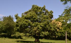 Costituita a Busca l'associazione fondiaria 'Terre di mezzo'