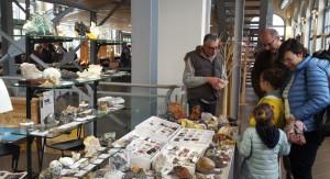 'GeoBra' 2019: minerali, fossili e gemme in mostra