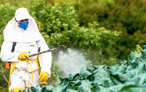 Saluzzo, vietati i trattamenti antiparassitari con fitofarmaci ed erbicidi tossici per le api nel periodo di fioritura