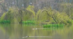 'L'Oasi delle famiglie' dal 24 marzo nell'oasi di Crava-Morozzo
