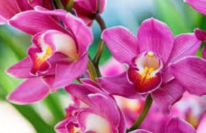 Unicef, anche a Bra le orchidee solidali in vendita