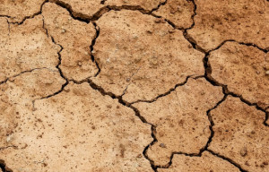 Emergenza siccità, Coldiretti: 'Occorre anticipare la stagione irrigua e diffondere la cultura della prevenzione'