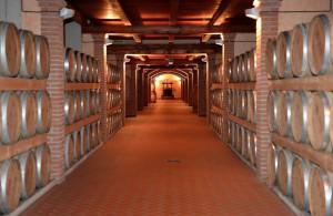 Il 6 per cento del vino italiano è prodotto in provincia di Cuneo