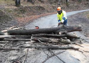 Albero abbattuto dal vento sulla strada per Valmala, rimosso dalla Protezione Civile