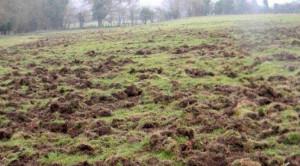 Per le coltivazioni della Granda è già 'allarme cinghiali'