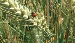 Coldiretti Cuneo: boom dell'agricoltura bio, a Neive una serata di approfondimento e degustazione