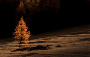 La foresta 'più bella d'Italia' è in Valle Stura
