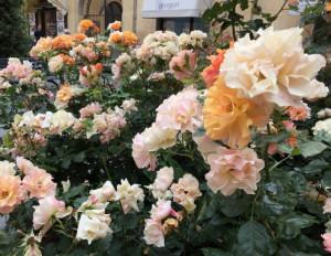 Ritorna il concorso 'Alba in Fiore'