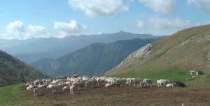 Rischia di tardare la salita agli alpeggi più alti in alcune zone della provincia di Cuneo