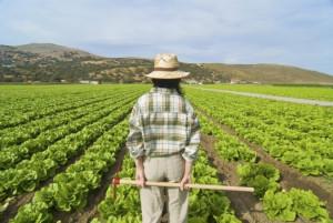 Braccia restituite all'agricoltura: sempre più ragazzi cuneesi scelgono di lavorare in campagna