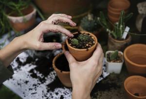 Con 'Intersezioni - Abitare la decrescita' Cuneo pensa all'ecologia