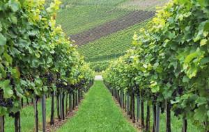 Agricoltura sociale, Coldiretti Piemonte: 'Bene il decreto dopo quattro anni di attesa'