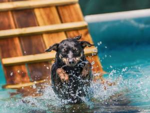 A Carrù aperta la piscina per cani 'A pelo d'acqua'