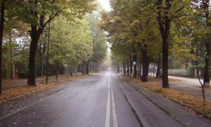Cuneo: l'ufficio del Verde Pubblico abbatterà 15 alberi su viale Angeli e su alcune ripe comunali