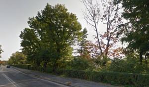Lettera al direttore: 'L'abbattimento degli alberi in corso Marconi a Cuneo l'ennesimo scempio ambientale'