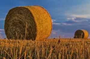 Un quarto del Premio PAC del Piemonte sarà destinato alle aziende agricole della Granda