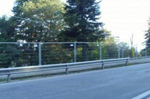 Borgna accoglie l'appello di alcuni cuneesi: la grande acacia di corso Marconi sarà salvata dall'abbattimento