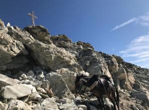 'Degio' fa 10: con la mula Pioggia sulla vetta della Rocca la Marchisa