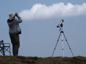 Parco del Monviso, al Bric Lombatera cominciano le osservazioni dei rapaci migratori