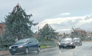 Maltempo, alberi abbattuti nell'Albese e nel Braidese