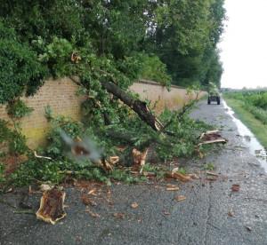 Castello di Racconigi, cade un albero sulla strada: nuovi guai per il parco?