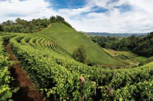 Vendemmia 2019, è record per le esportazioni di vino Made in Italy