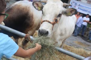 Villanova Mondovì, è iniziata la Festa dell'Addolorata (VIDEO)