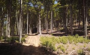 La filiera corta della valle Maira scelta dalla Regione per parlare dell'importanza delle foreste