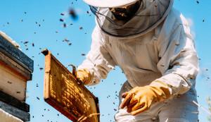 L'apicoltura piemontese alle prese con il riscaldamento globale: in arrivo contributi dalla Regione