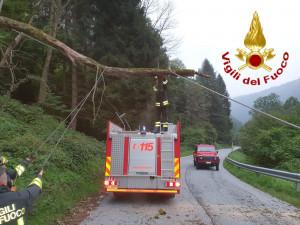 Danni alla linea Enel dopo la caduta di un albero a Barge