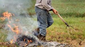 Coldiretti Piemonte: 'Rivedere al più presto il divieto di abbruciamento di materiale vegetale'
