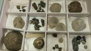Bra: mille reperti fossili donati al museo 'Craveri'
