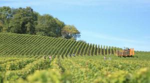 Coldiretti: 'Aumenti Iva graverebbero su economia alimentare Made in Piemonte'
