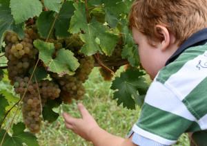 Più di cento produttori piemontesi possono fregiarsi del marchio 'The Green Experience'