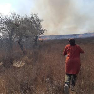 La braidese Michela Marchi tra gli ulivi in fiamme della Palestina: 'I coloni appiccano il fuoco e attaccano i volontari'