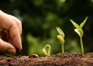 Boom dell'agricoltura bio, Coldiretti Cuneo: 'Non una moda ma un metodo rigoroso che chiede formazione'