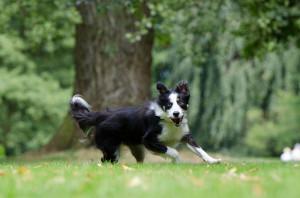 Cosa è cambiato a Cuneo dopo l'ordinanza sui cani?