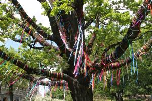Bra, in venti scuole della città verrà piantato un nuovo albero