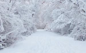 In Piemonte la temperatura dell'inverno 2018-2019 è stata superiore alle media di quasi 2 gradi