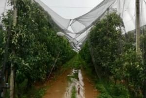 Maltempo, Coldiretti Cuneo: 'Compromesso il 40 per cento delle semine'