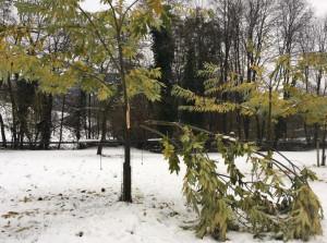 Una serata di formazione con Coldiretti Cuneo per recuperare i castagneti danneggiati dalla neve
