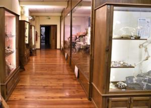 Regolarmente aperto anche all'Immacolata il Museo Naturalistico del Fiume Po di Revello