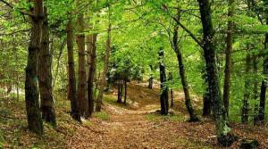 Foreste, aperti i bandi Psr per il finanziamento degli interventi selviocolturali