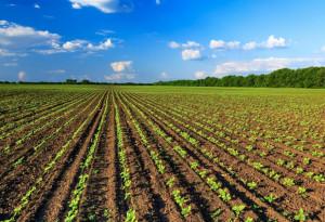 Manovra, Coldiretti: 'Dalle facilitazioni fiscali al sostegno delle filiere, bene le misure per l'agricoltura'