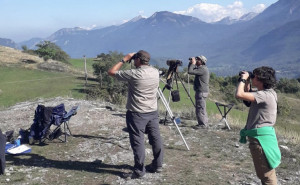 Un 2019 da record: mai così tanti falchi pecchiaioli sulle Alpi Marittime